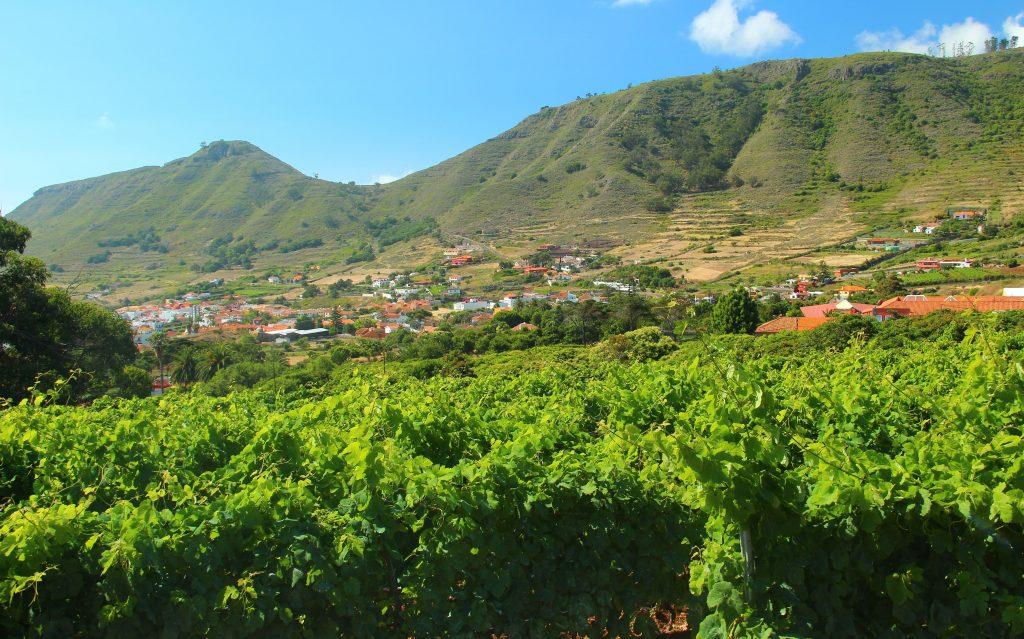 Tenerife isla del vino