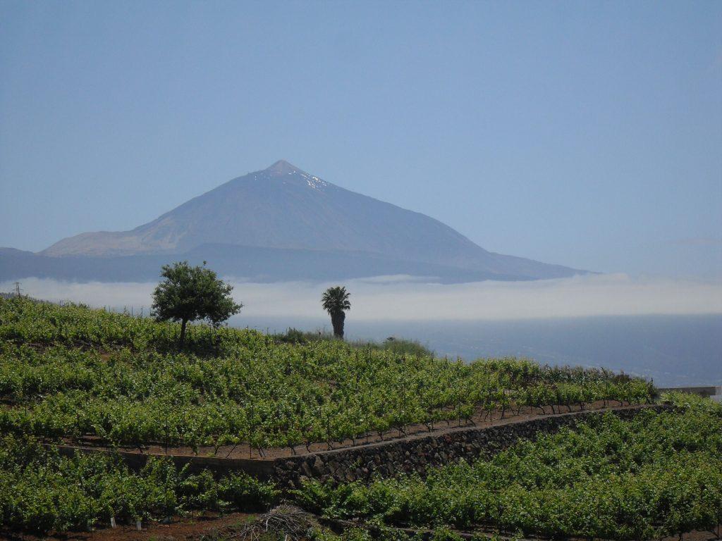 tenerife wine island